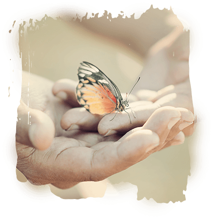 Butterfly in open hands
