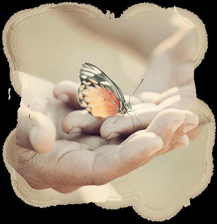 Butterfly in open hands